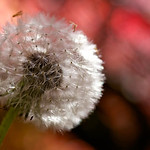 Using the Canon 60mm macro on the 400D